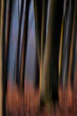 Morgenlicht im Kellerwald