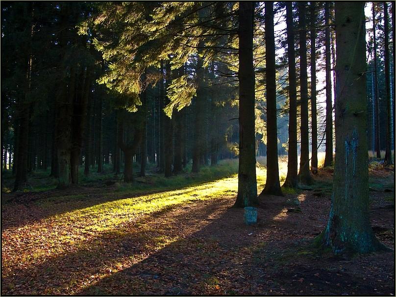 Morgenlicht im Ternell