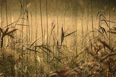 Morgenlicht und Tautröpfli im Gras