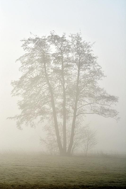 Morgennebel - 2 -