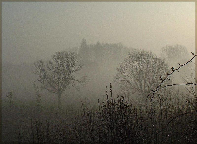Morgennebel am Niederrhein