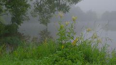 Morgennebel am See (niebla de la mañana en el lago)