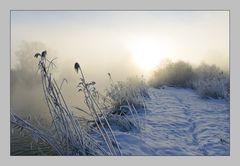 Morgennebel an der Amper