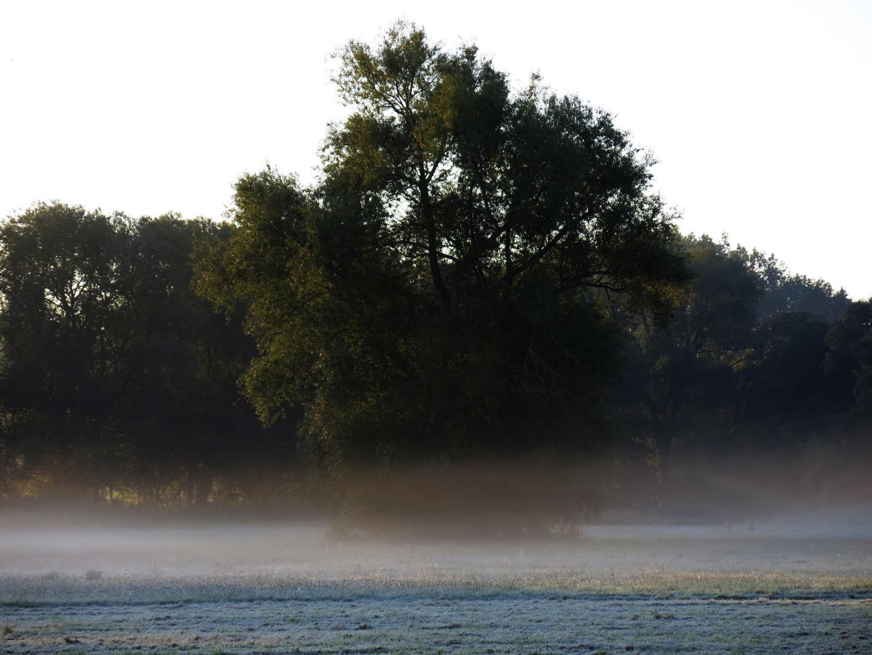 Morgennebel an der Losse -2-