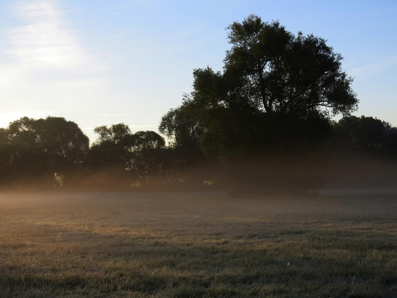 Morgennebel an der Losse -3-