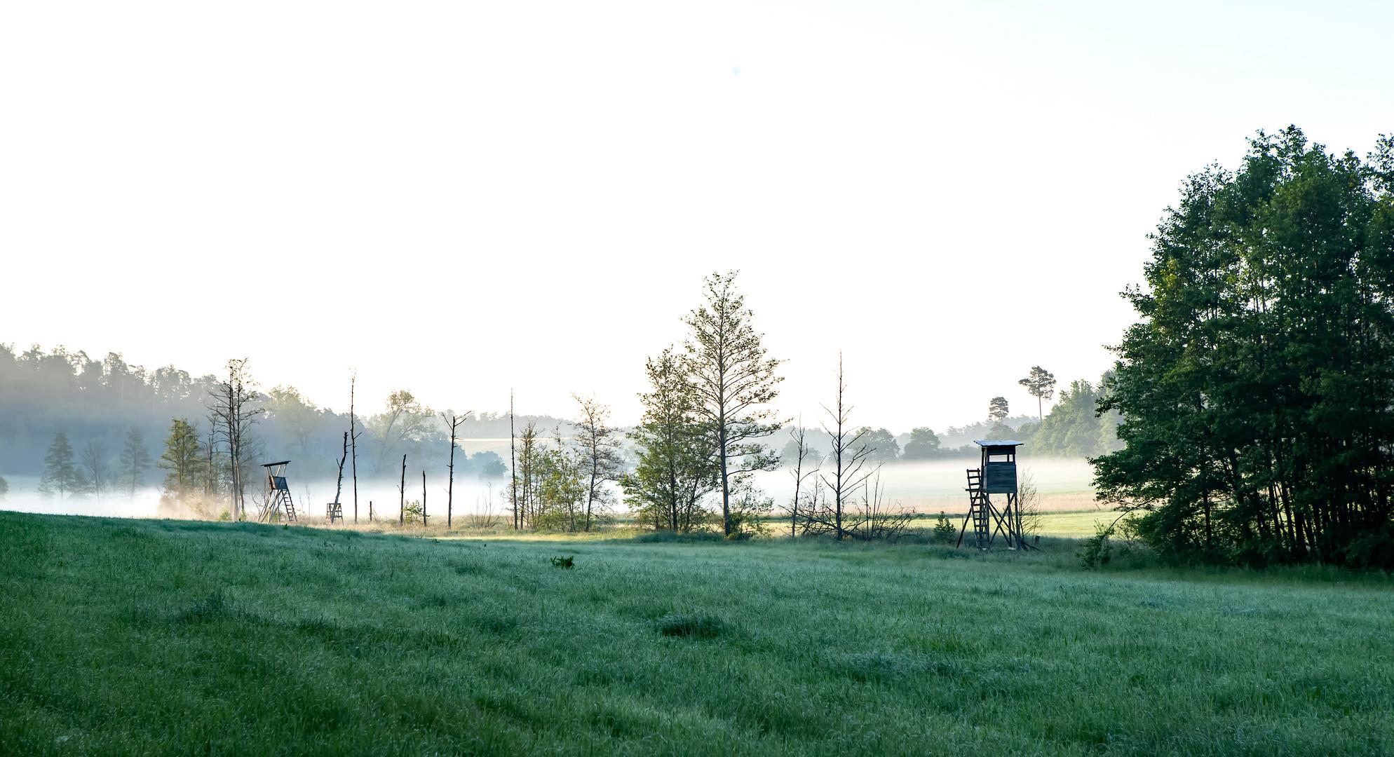 Morgennebel im Biberrevier