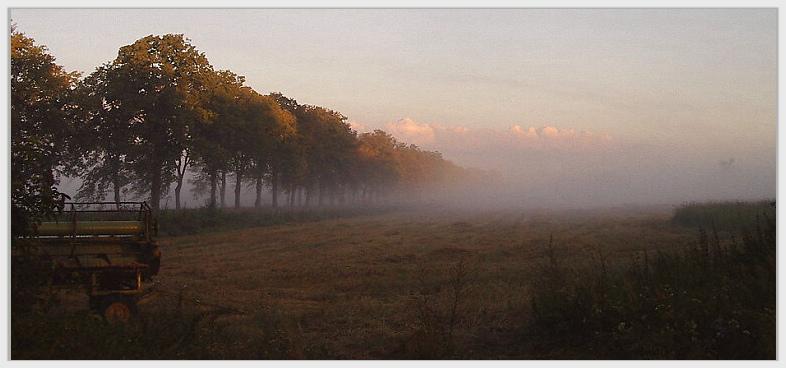Morgennebel ( Im Luch 7 )
