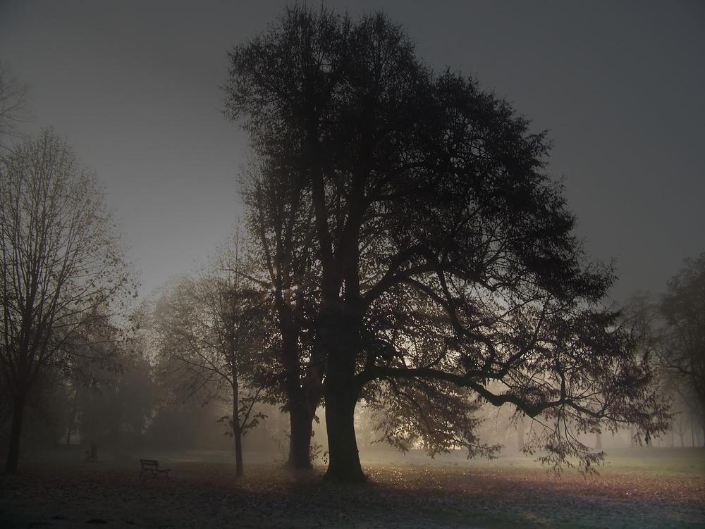 Morgennebel im Park
