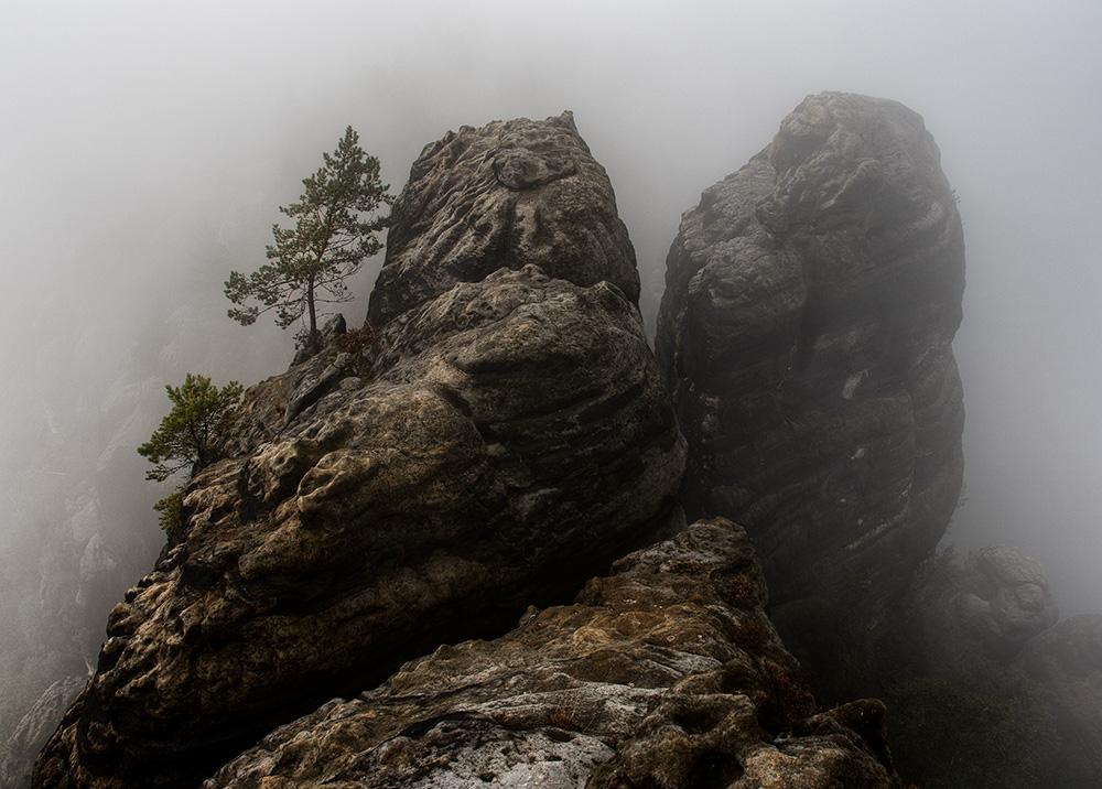 Morgennebel in den Schrammsteinen