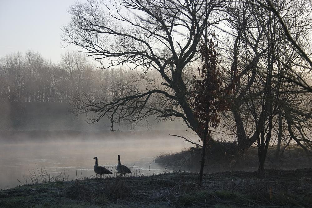 Morgennebel in der Aue