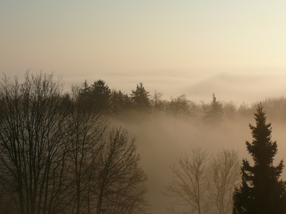 Morgennebel in der Rhön