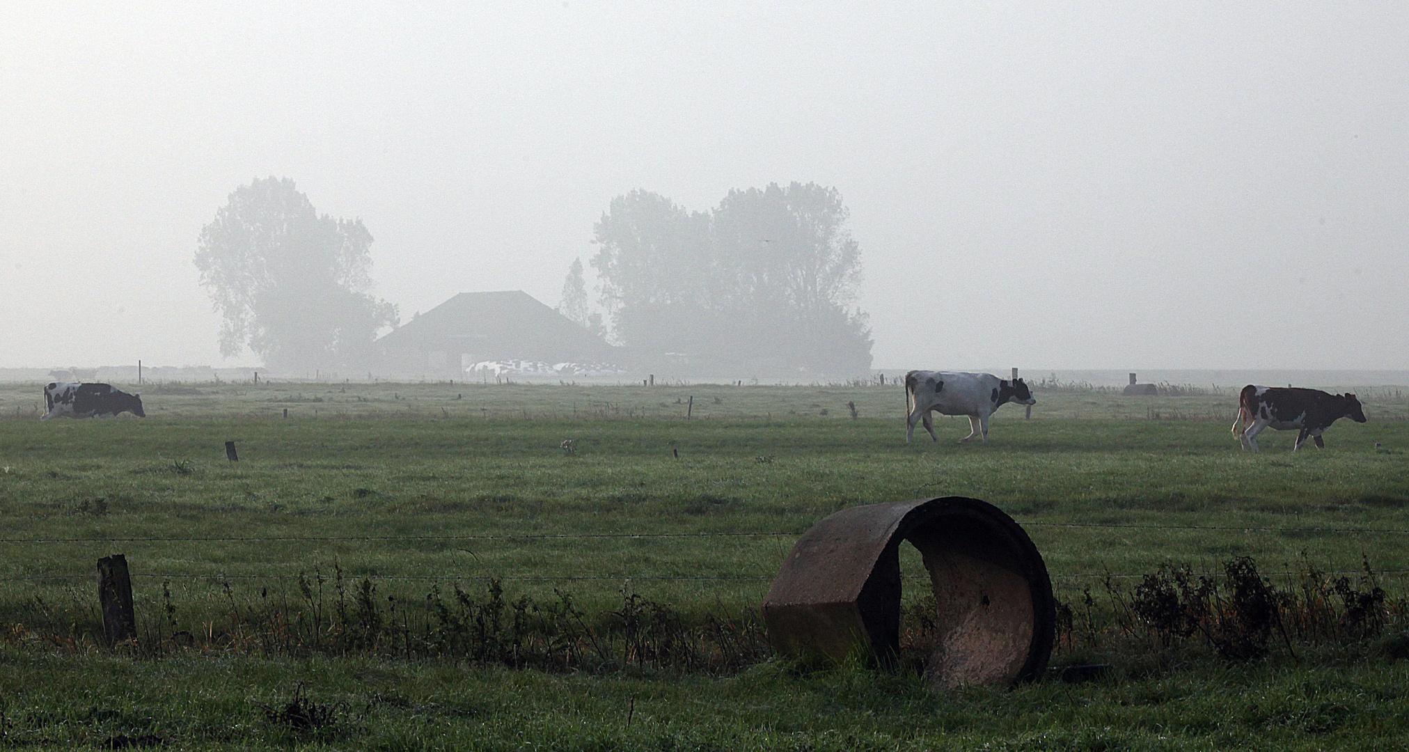 Morgennebel in Ostfriesland