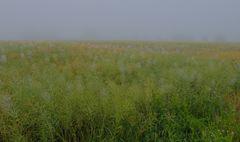 Morgennebel (niebla de la mañana)