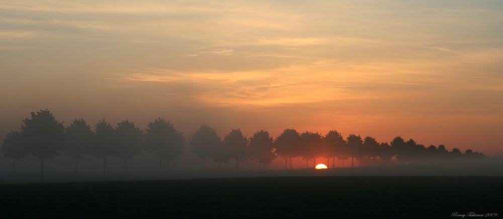 Morgennebel  // Niebla de la mañana