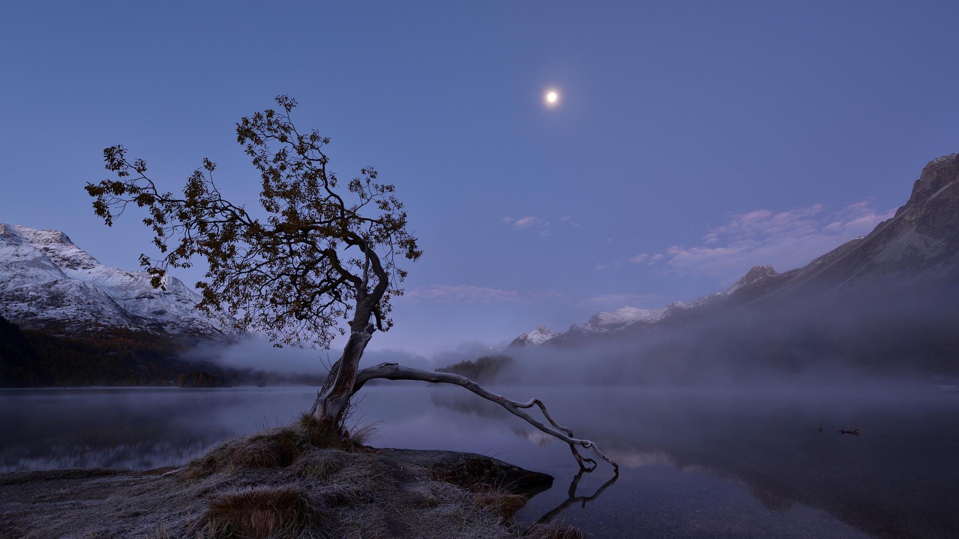 Morgennebel über dem Silsersee