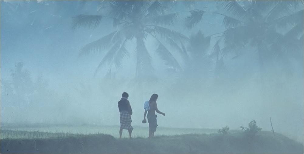 Morgennebel über den Reisfeldern........(reloaded)