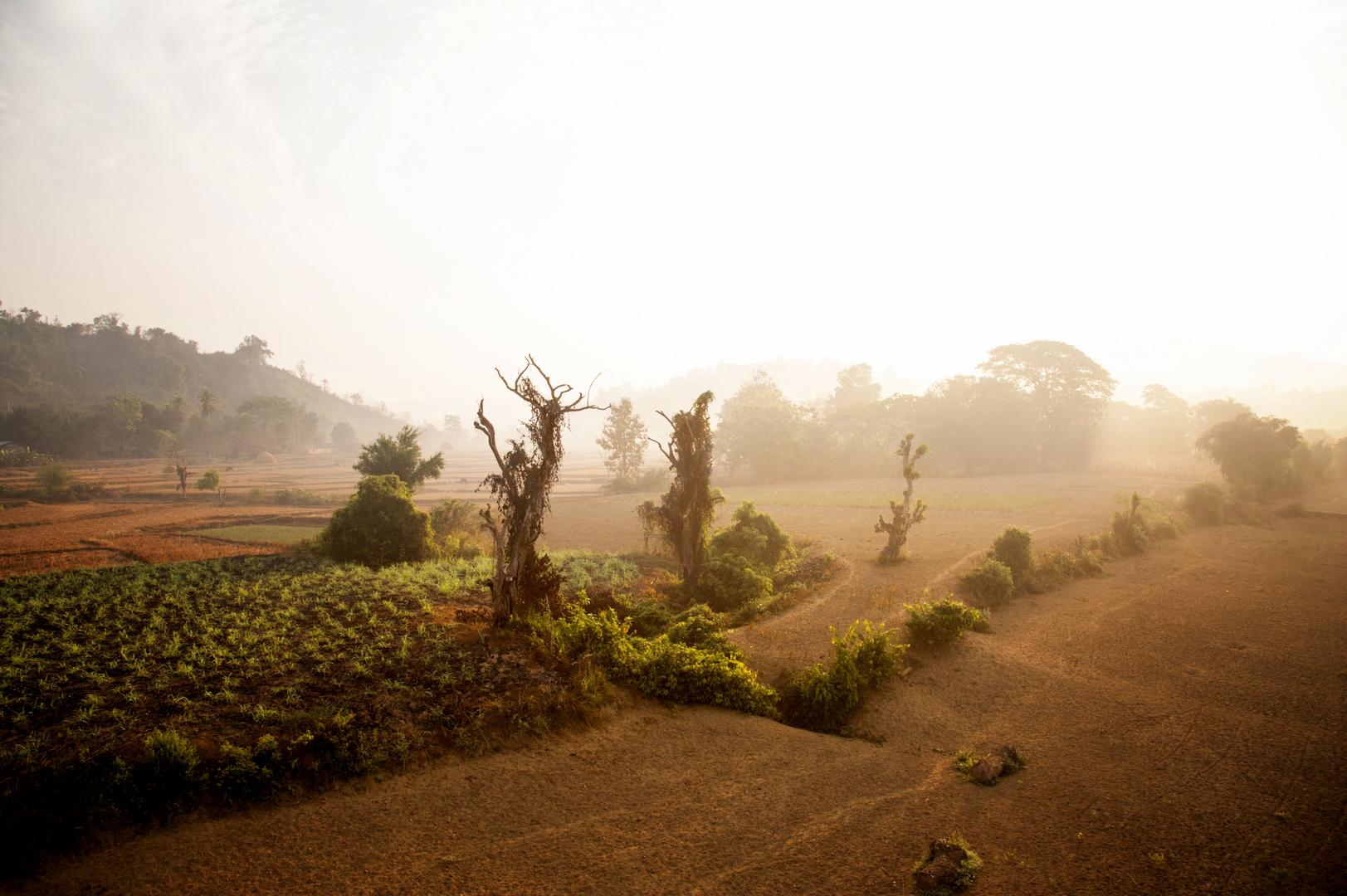 Morgennebel über Reisfeldern