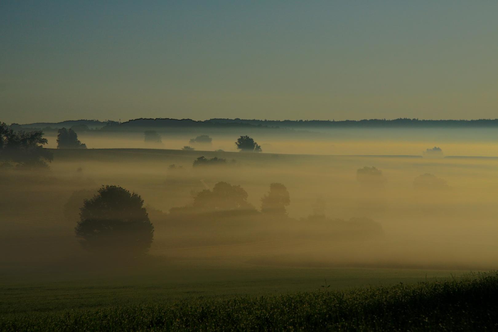 Morgennebel wie im Herbst