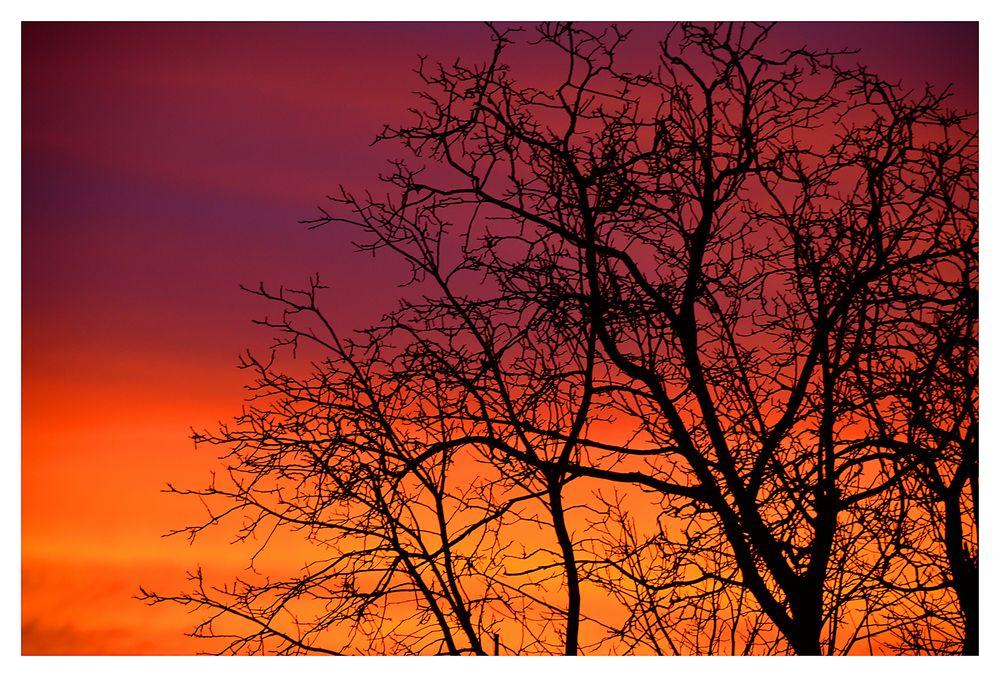 Morgenröte # 5105