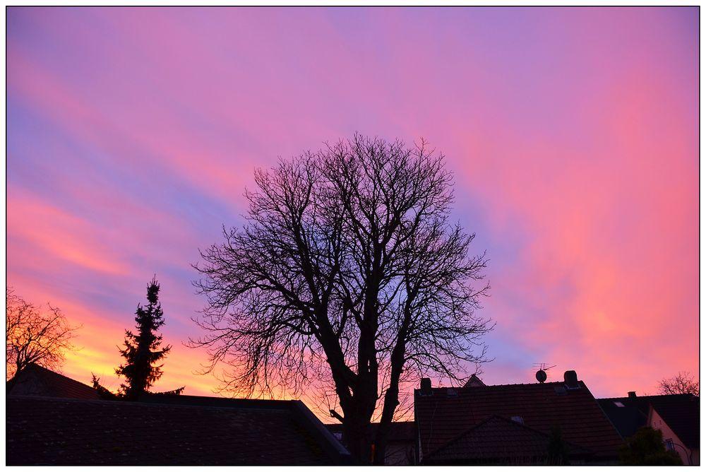 Morgenröte am Heilig Abend im Jahr 2013