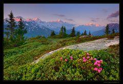Morgenrot am Mt. Blanc
