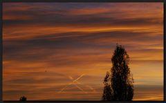Morgenrot mit Vogi... ;o)))
