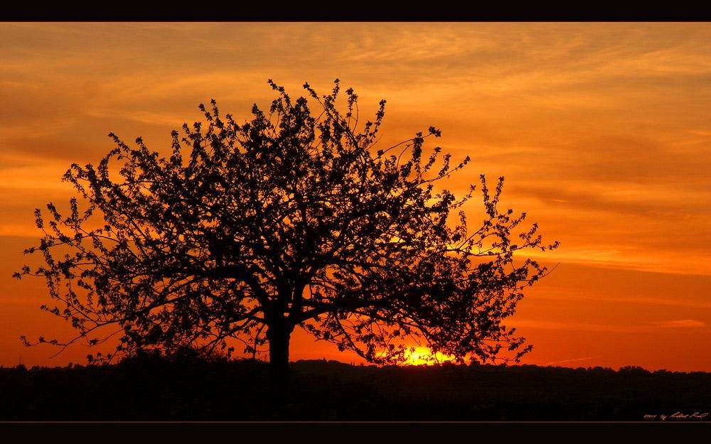 Morgenrot - Schlechtwetter droht...)c: