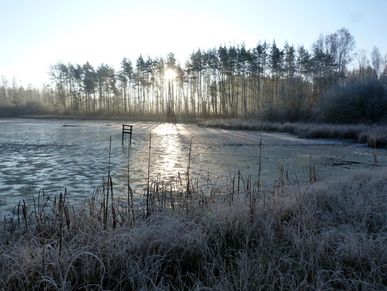 Morgens am Engelmannsteich bei Tirschenreuth November 2011