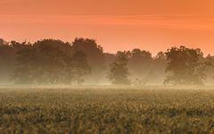 Morgens am Feld