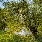 Morgens am Fluss entlang