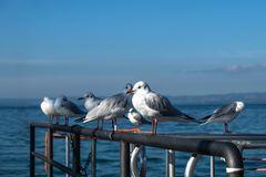 Morgens am Hafen von Bardolino