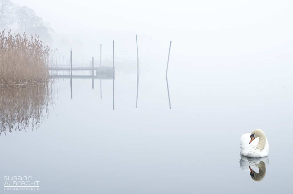 Morgens am See...