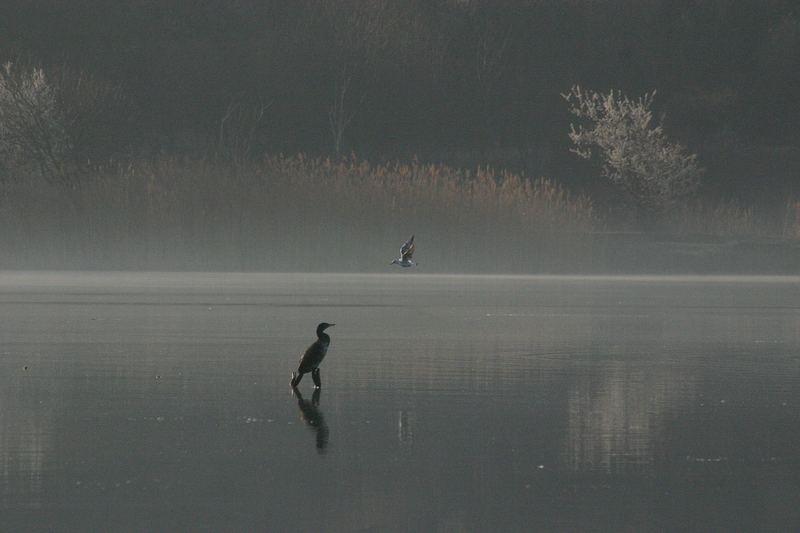 Morgens am Teich...