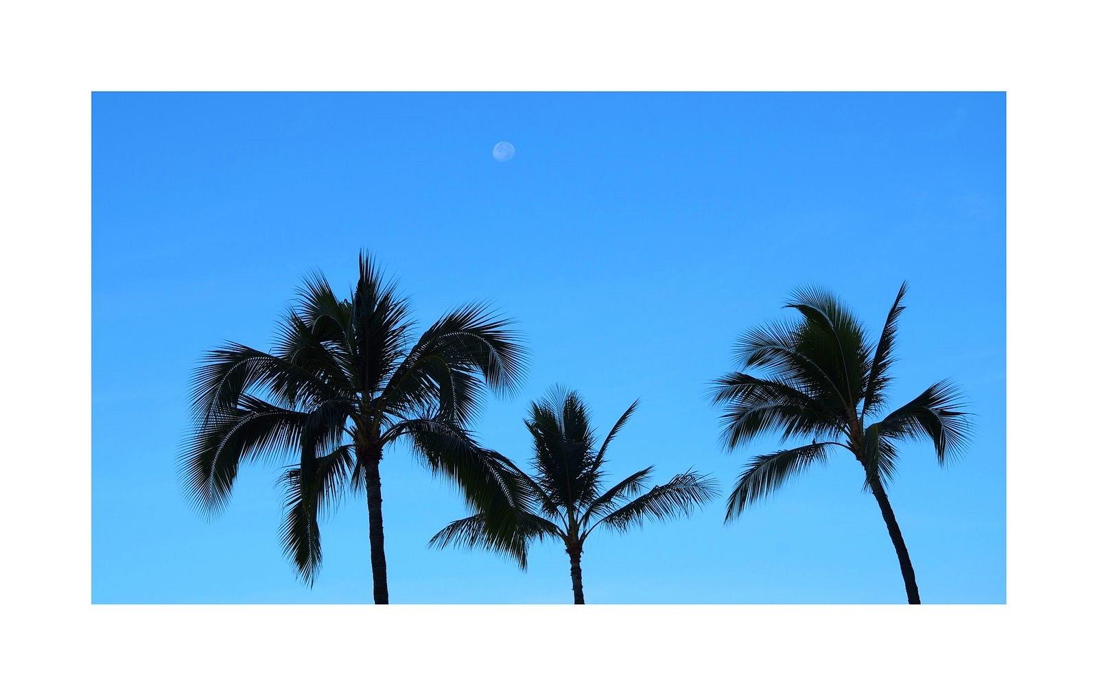 Morgens am Waikikibeach