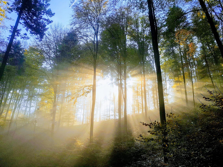 Morgens an der Wachenburg