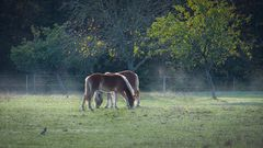 Morgens auf der Pferdewiese