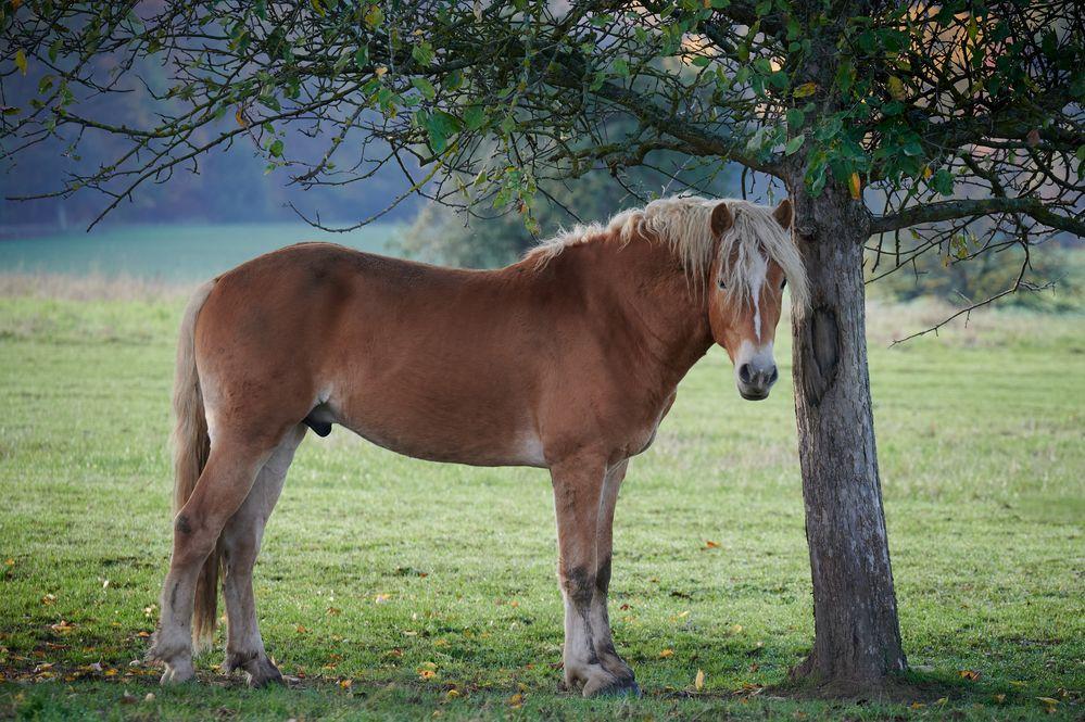 Morgens auf der Pferdewiese II