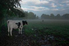 Morgens auf der Weide