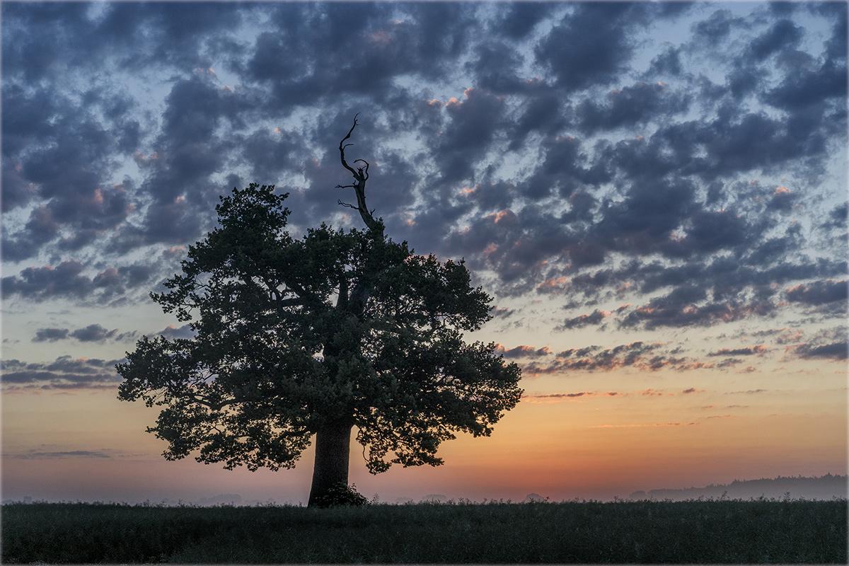 Morgens bei der alten Eiche... (2)