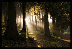 Morgens früh im Wald