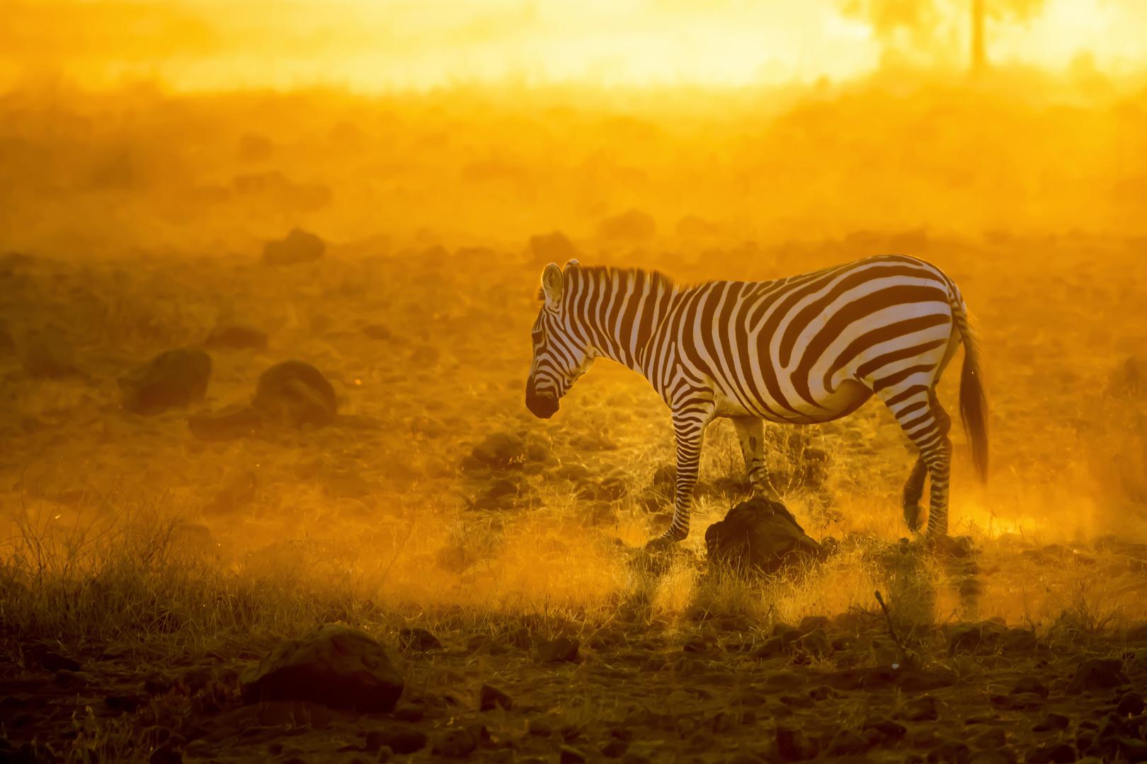 Morgens im Amboseli