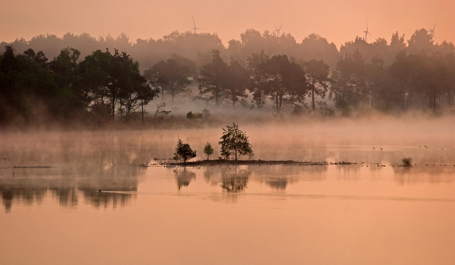 Morgens im Bauernmoor