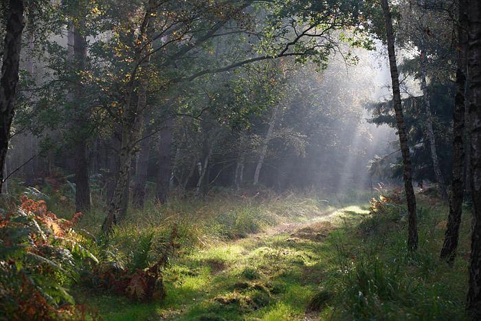 Morgens im Darsswald