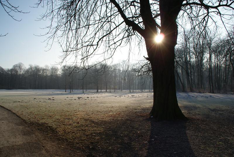 Morgens im Englischen Garten