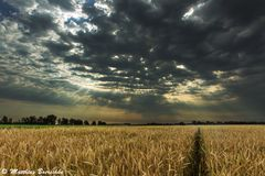 Morgens im Feld