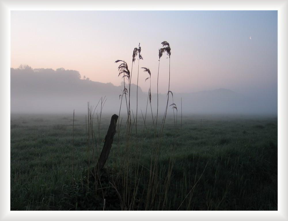 Morgens im Flusstal