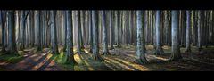 morgens im gespensterwald.