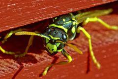 Morgens im Insektenhotel