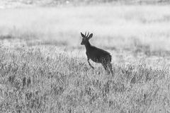 morgens im Kitulo Nationalpark