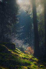 Morgens im Märchenwald.